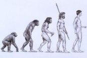 490_2_Evolution