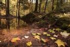 Fall-woodland
