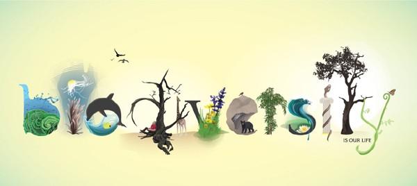 Rang a Cúig agus a Sé_ Biodiversity Poems