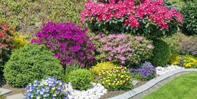 shrubs_1_in_a_garden_150415_resized